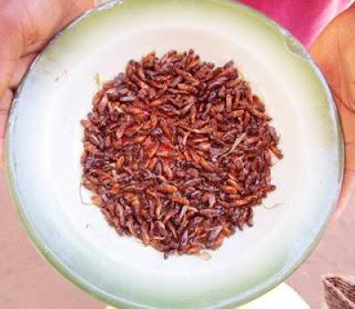 Kiến bay là món ăn khoái khẩu của người Guatemala