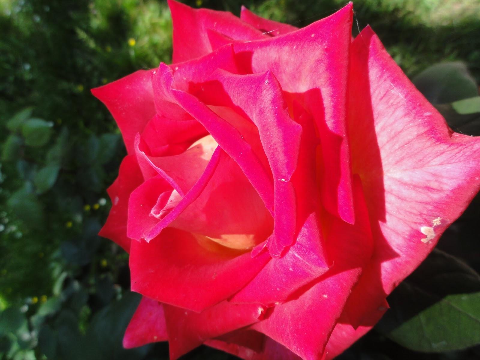 Le coquelicot rose parc et jardin d 39 acquigny france for Parc et jardin