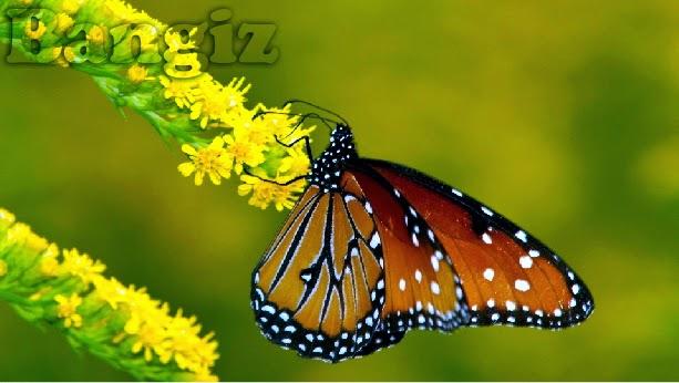 Gambar dengan watermark