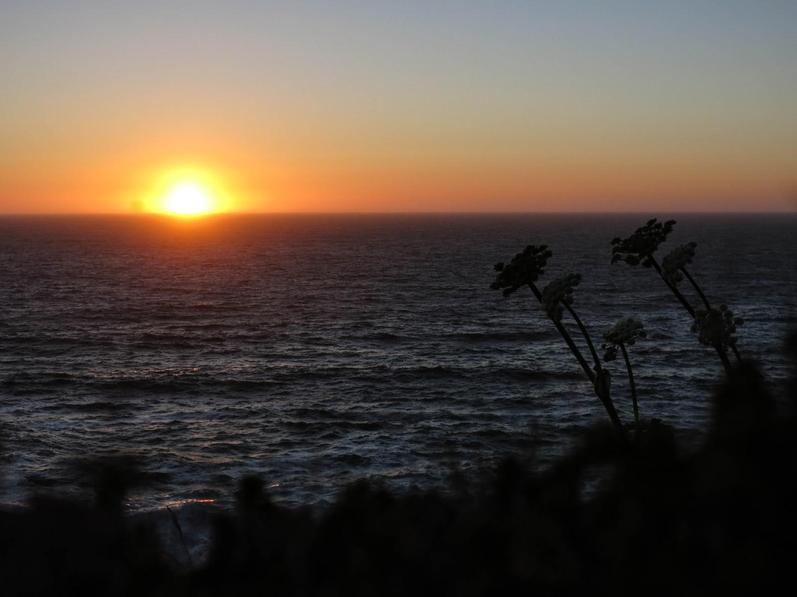 Yarrow at Sunset, Indian Sands