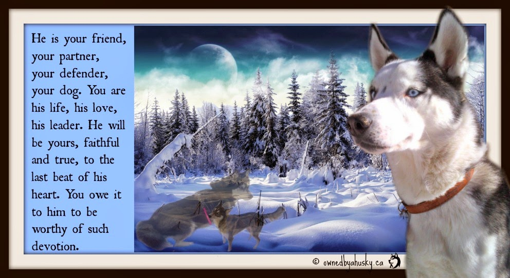 husky picture with dog quote
