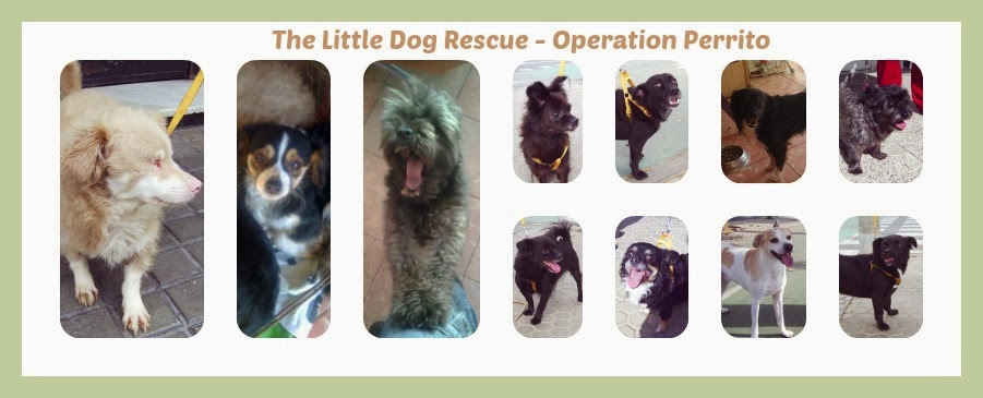 The Little Dog Rescue - Operation Perrito