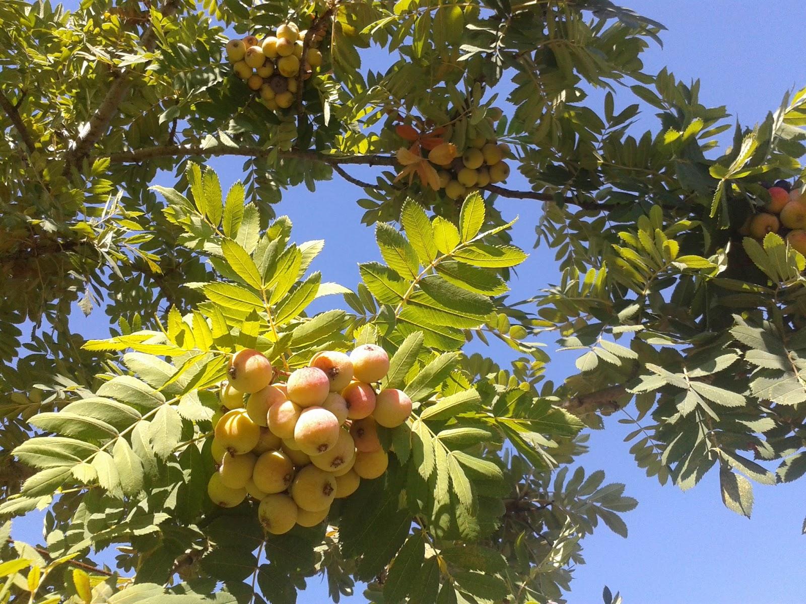 il blog di sam frutti antichi ormai dimenticati
