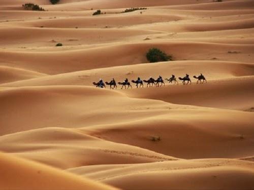Padang pasir - ilustrasi