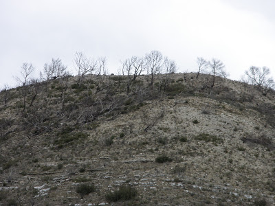 Monte quemado Valmadid