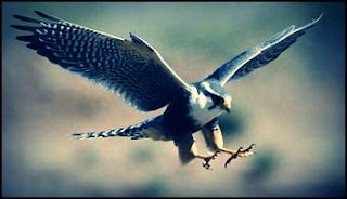 burung-terpantas-dunia