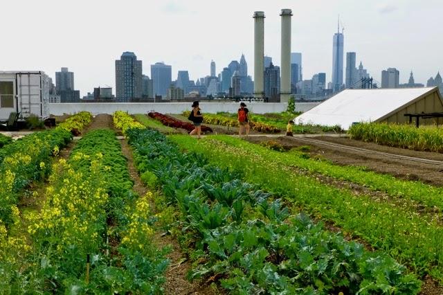 The Monkey Buddha: Future of Food: Urban Farming