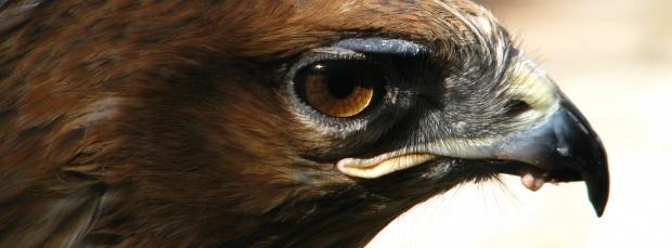 guzel kus facebook kapak resimleri+%252820%2529 35 En Güzel Facebook Kuş Kapak Resimleri indir