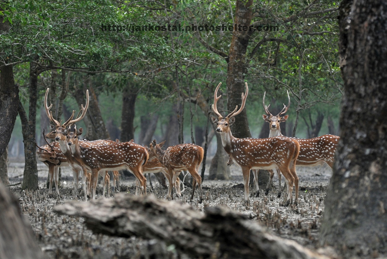 Rocket steamer trip in Bangladesh for an expeditions to the Sundarbans