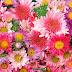 Especialidade de Flores