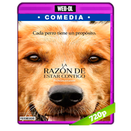 La razón de estar contigo (2017) WEB-DL 720p Audio Dual Latino-Ingles
