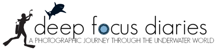 Deep Focus Diaries