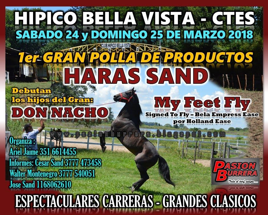 BELLA VISTA POLLA - HARAS SAND - 25 MARZO
