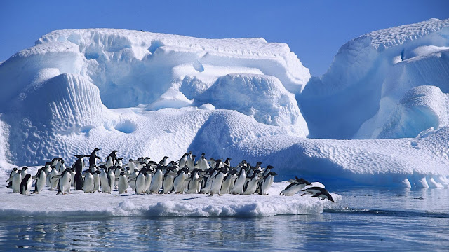 Antarctica Penguins Diving in Sea