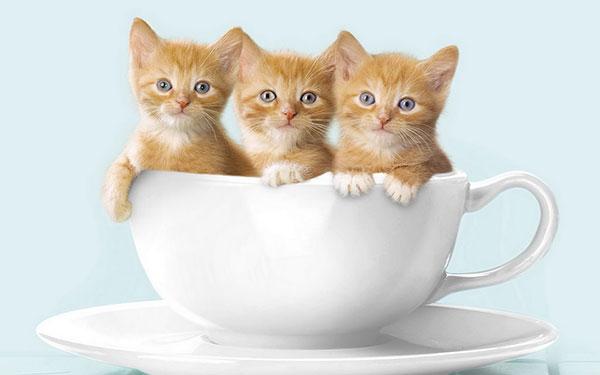 hình ảnh mèo đẹp