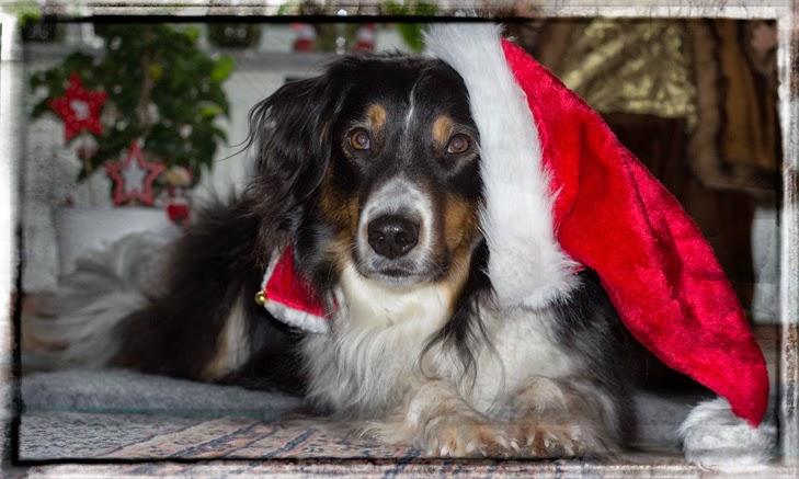 1. Advent Hund