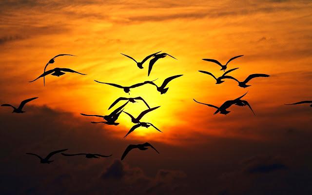 افضل 10 نصائح للعمل بكفاءة في تصوير الطيور وهي تحلق