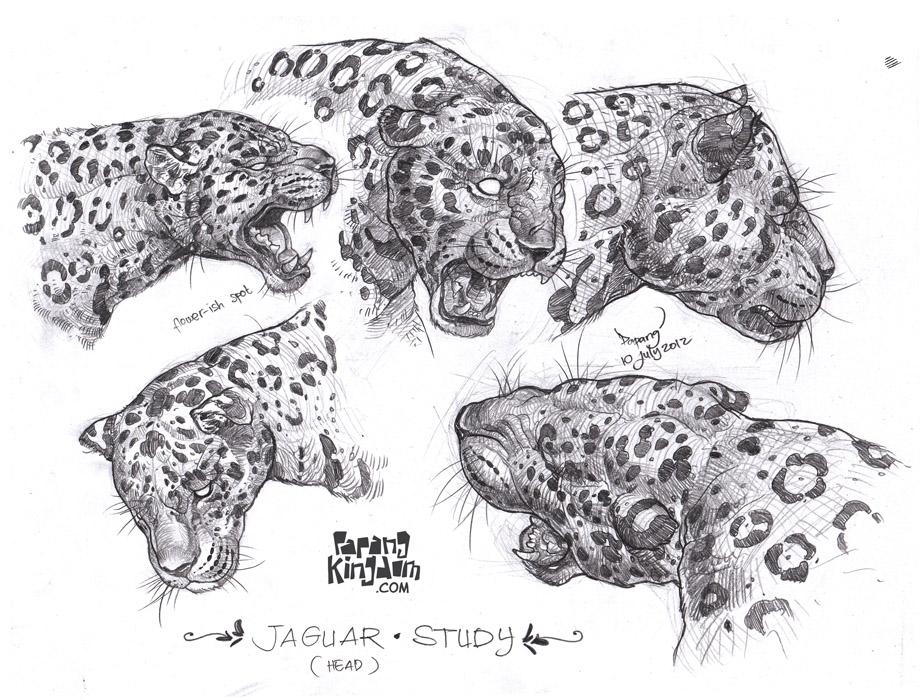 jaguar animal running drawing