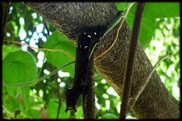 Caterpillar.