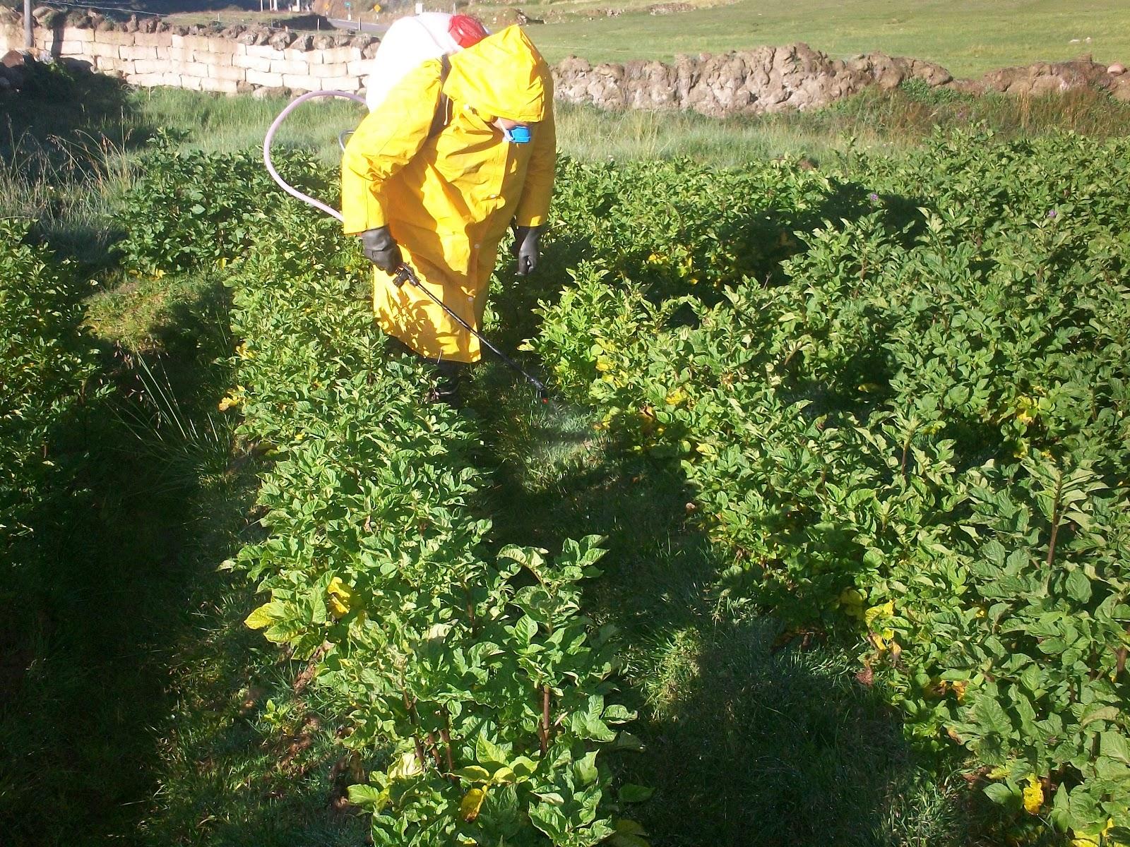 Buenas Prácticas Agrícolas Para la Agricultura (Part. 3)