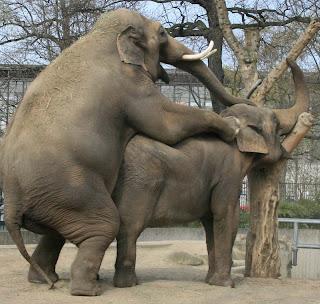 L'éléphant en pleine action