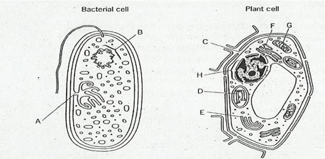 stpm biology  stpm biology