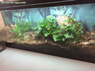 Terrarios para tortugas hoja