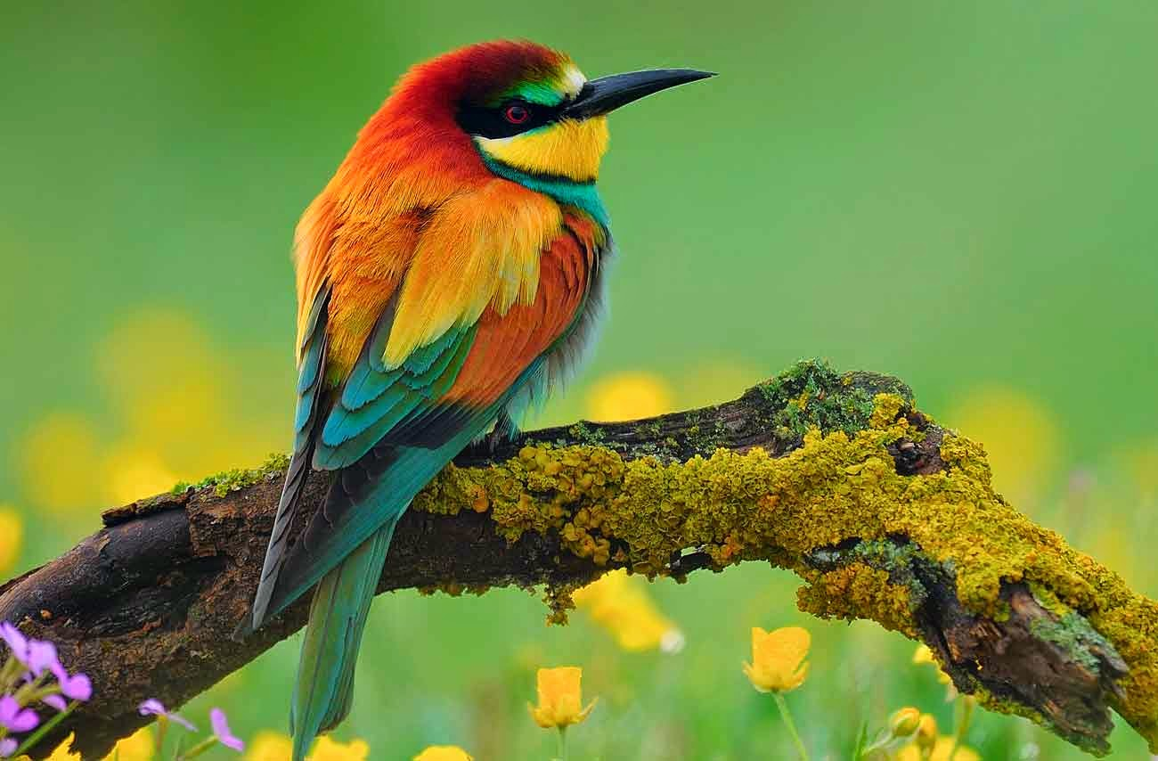 40 Free Beautiful Birds Wallpapers HD   Tinydesignr