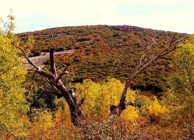 Otoño en el parque Nacional de Cabañeros