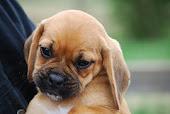 um cão amigo