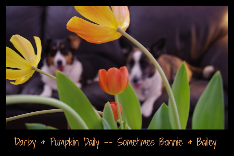 DARBY&#39;S &amp; PUMPKIN&#39;S DAILY