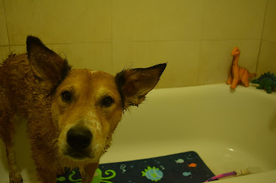 dog getting spa mud treatment