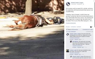 buongiornolink - Il suo cavallo viene investito a morte E l'agente lo coccola fino alla fine