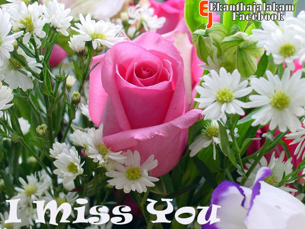 lovely quotes i miss you in cute rose flower new images 2013