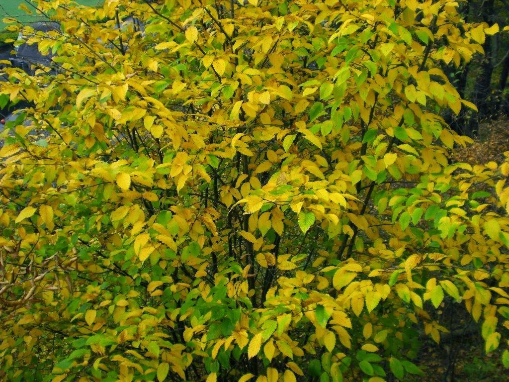 Herbst Ruhrtal Hunderunde gelb Busch