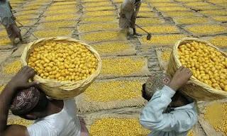Pakisthani Farmer