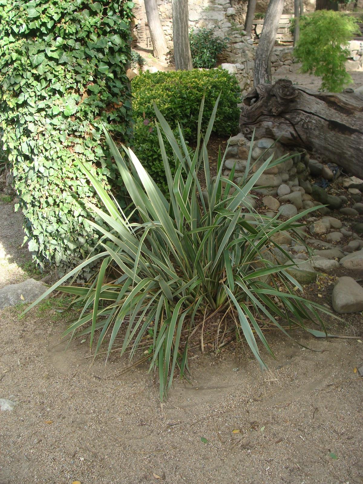 El rincon de un jardin jardines de l 39 antiga caserna dels for El jardin de l abadessa