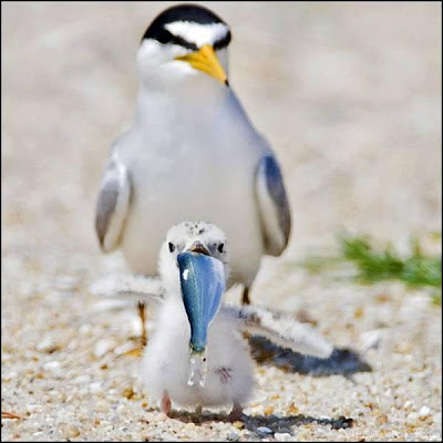 funny_picture_baby_bird