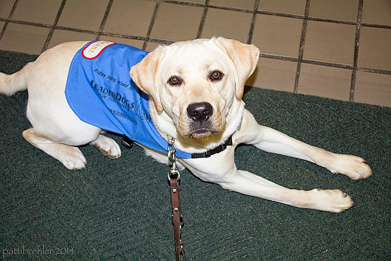 A young yellow lab is lying on a green rug on beige tile flooring, he is wearing the blue Future Leader Dog jacket and looking up at the camera. A leash is attached to his collar.