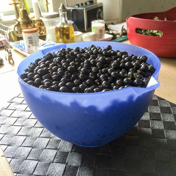 blackcurrants, svarta_vinbär