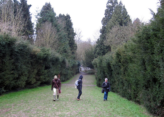The Yew Walk at High Elms. Even this was pretty slippery.