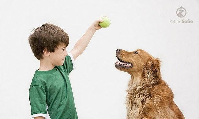 06 etapas para você adestrar seu cão