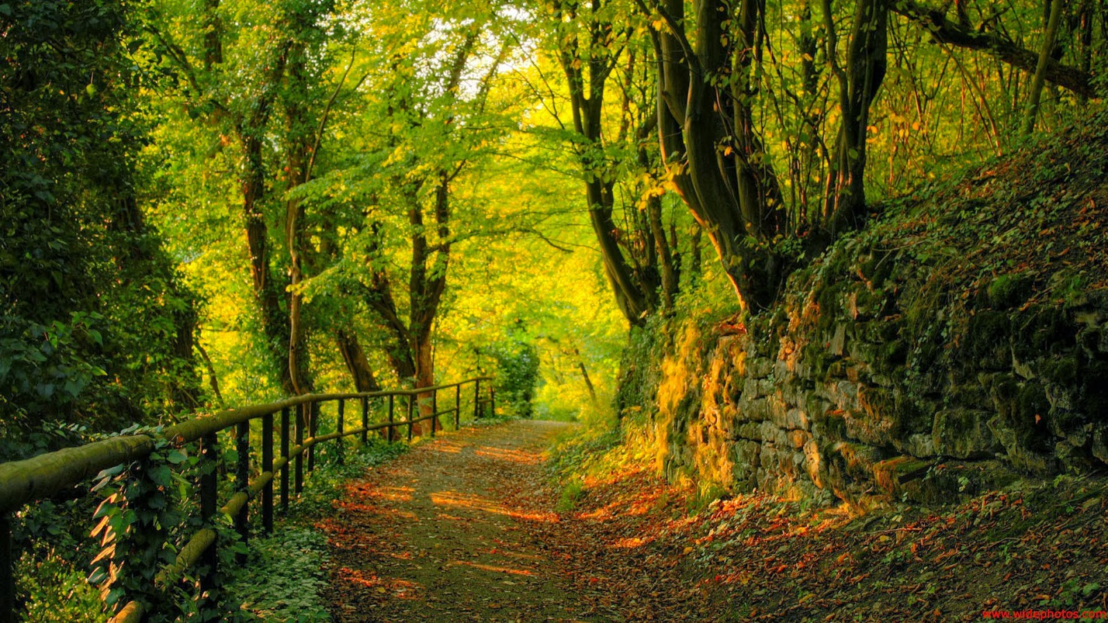 hd wallpapers 1080p forest nice pics gallery