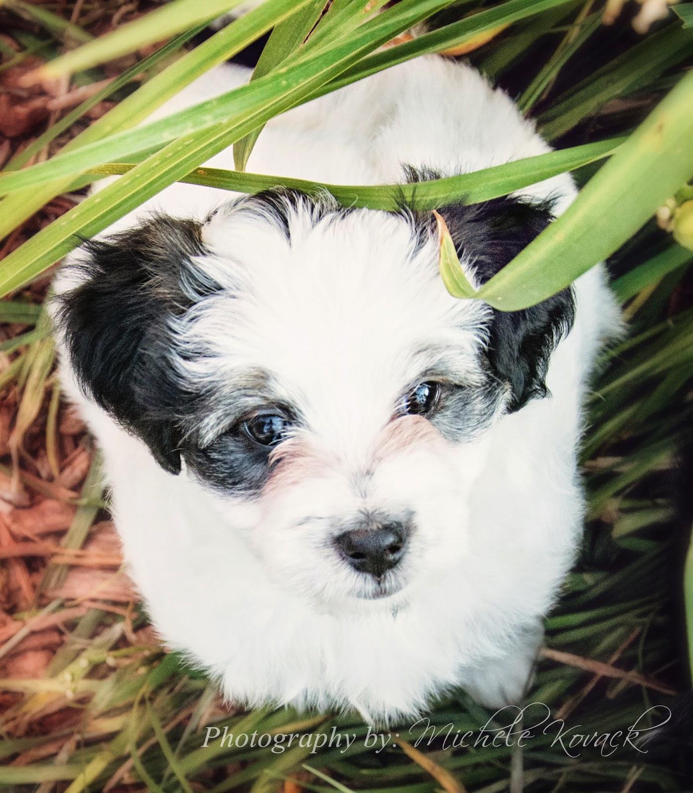 http://4.bp.blogspot.com/-_P7Y-UXBCL0/U9ZJNvsyl_I/AAAAAAAARoU/-FKDHlvCnOA/s1600/puppytwo.jpg