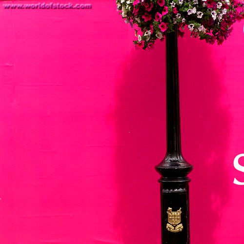 Exceptional Hot Pink Wall Paint Drinking! Not Studying.: Goth House Decor