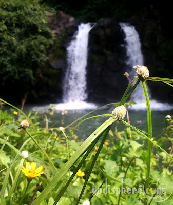 View of Bunga Twin waterfalls behind some wild grass and flowers