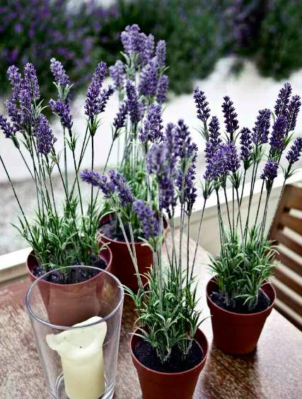Decoraci n artico ideas y consejos con flores y plantas - Cuidados lavanda en maceta ...