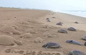 Dead sea turtles wash up ashore in India