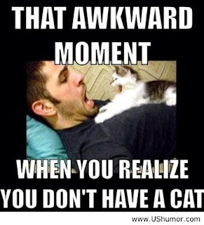 Funny cat sayings that awkward momens when you realize you don't have a cat