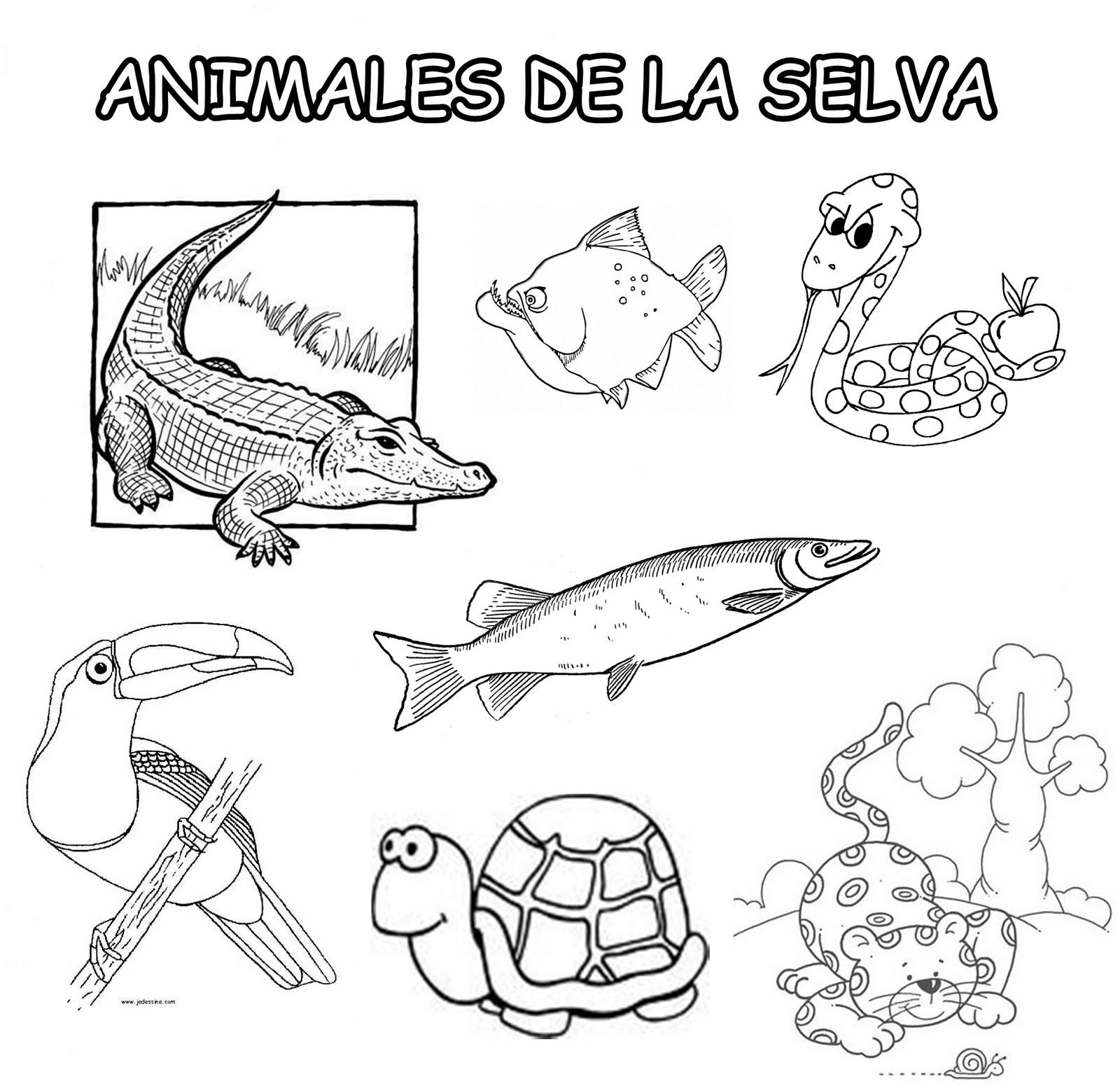 Animales De La Selva Peruana Para Colorear picture gallery